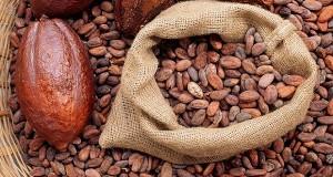 CXAP5E  Cocoa beans