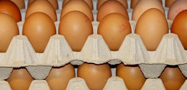 egg-708_4